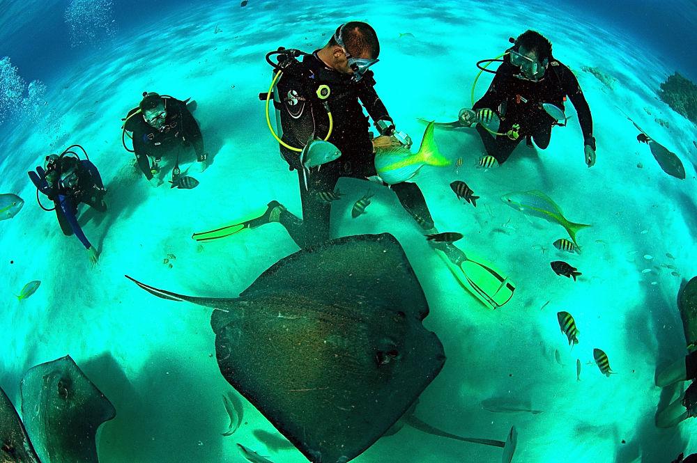 buceando en islas caimán